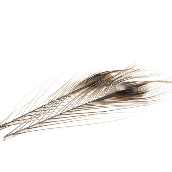 Quill De Paon DVX Ebarbe